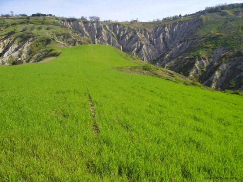Una distesa di prato verde brillante finisce nelle rocce dei Calanchi