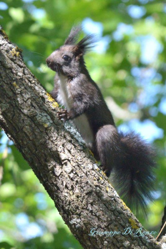 Uno scoiattolo su un albero