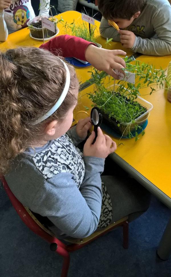 Un gruppo di bambini impara a riconoscere le piante