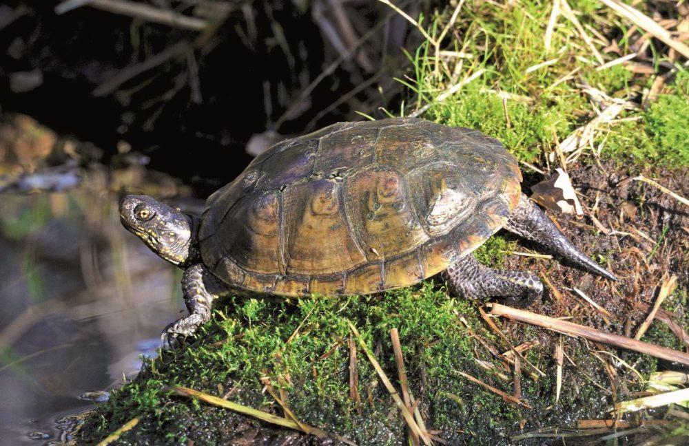 Un primo piano dall'alto di una tartaruga