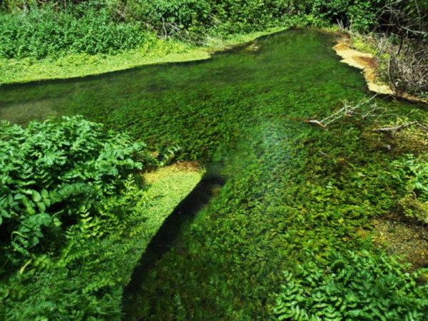 Una pozza di acqua con foglie che la rendono verde